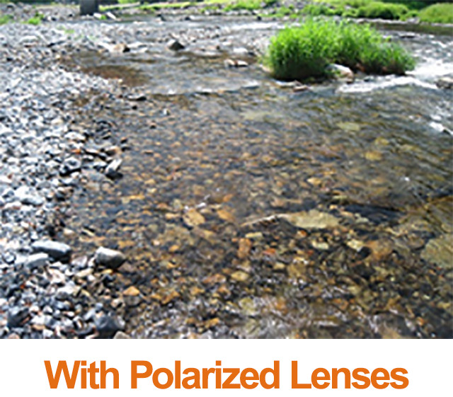 with Polarized Lenses